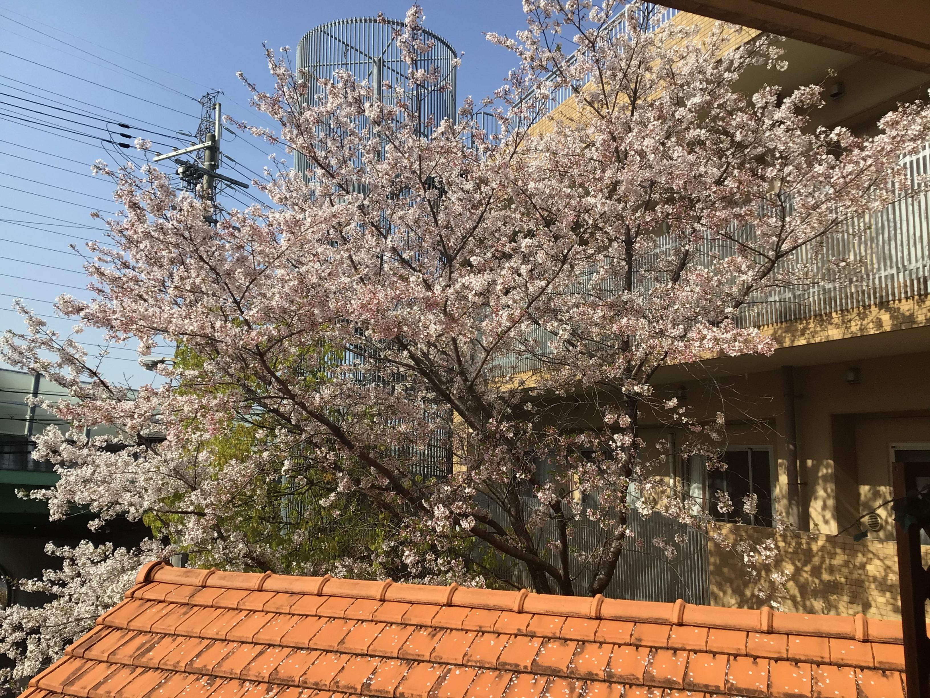 【東3丁目】お花見🌸
