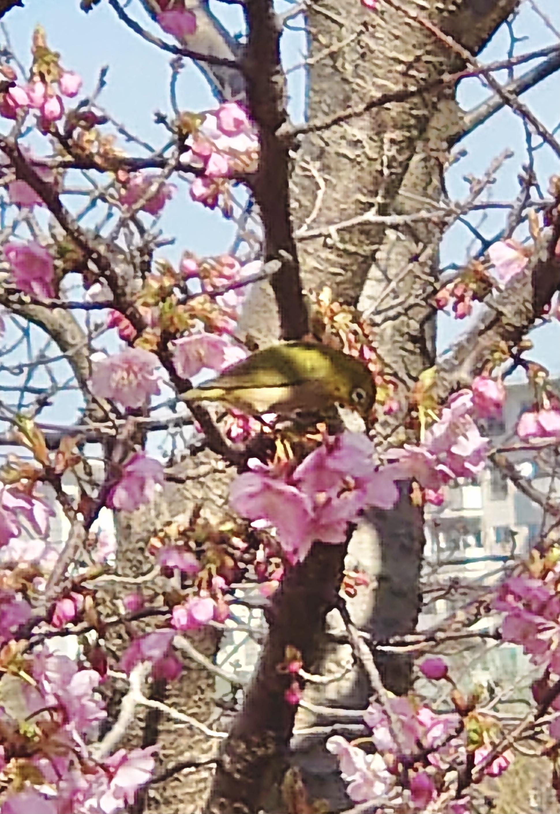 小さな春の足音~その2~